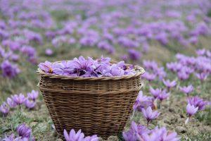 چرا عصاره زعفران زردبند باعث خنده میشود؟