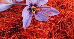 تولید کننده عصاره زعفران سحرخیز