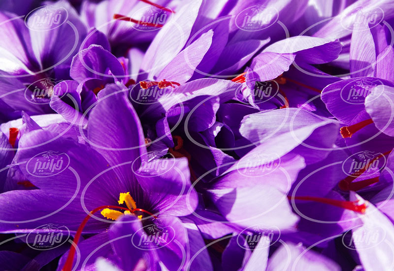 سفارش مجازی زعفران 10 مثقالی صادراتی
