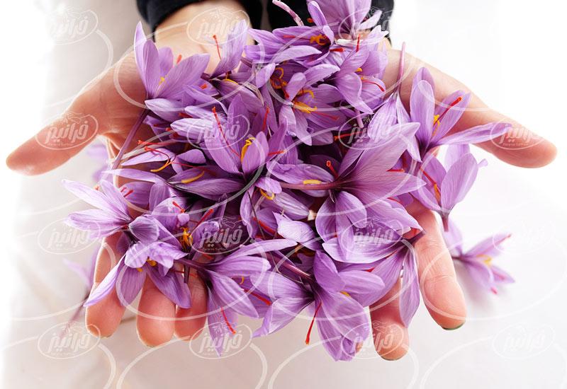 تولید کننده بهترین رنگ زعفران اترینا 250 سی سی