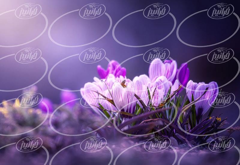 خرید زعفران مایع همراه با برگه آنالیز