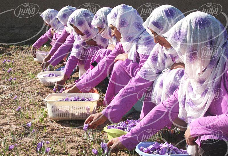 مرکز اصلی پخش زعفران در مشهد
