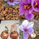 خرید اینترنتی اسانس زعفران برای تولید عسل