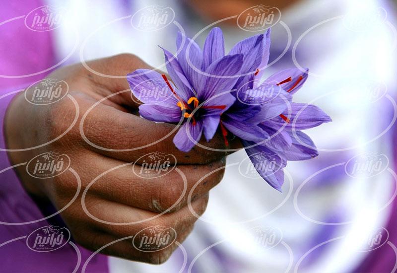 فروش عمده پودر زعفران خوراکی و ارگانیک
