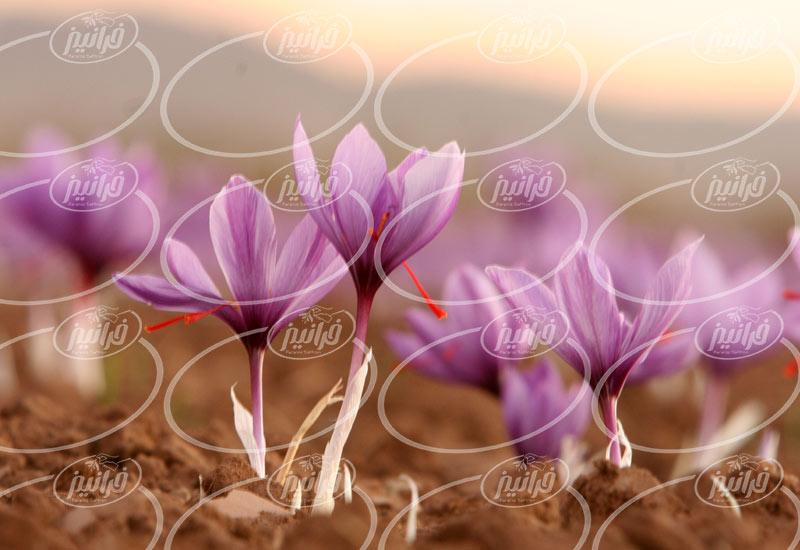 فروش اسپری زعفران در بسته بندی های جدید