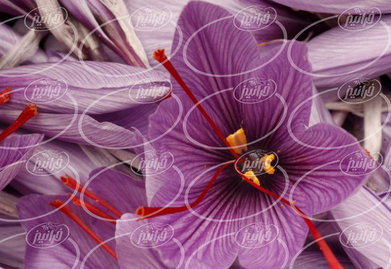 عرضه رنگ زعفران قاین و گناباد در کارتن های ۱۲ تایی