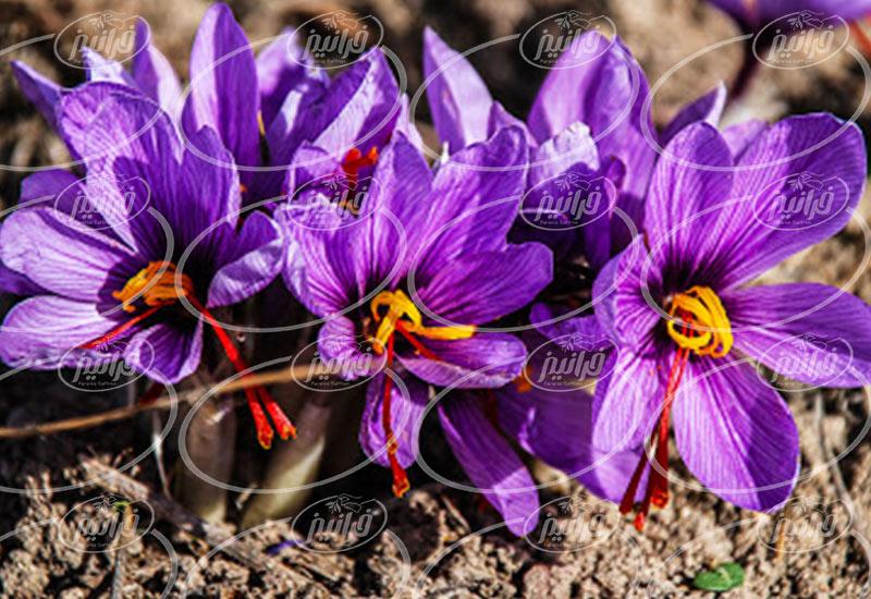 غرفه فروش زعفران پودر شده